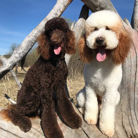 Kona & Archie.jpg