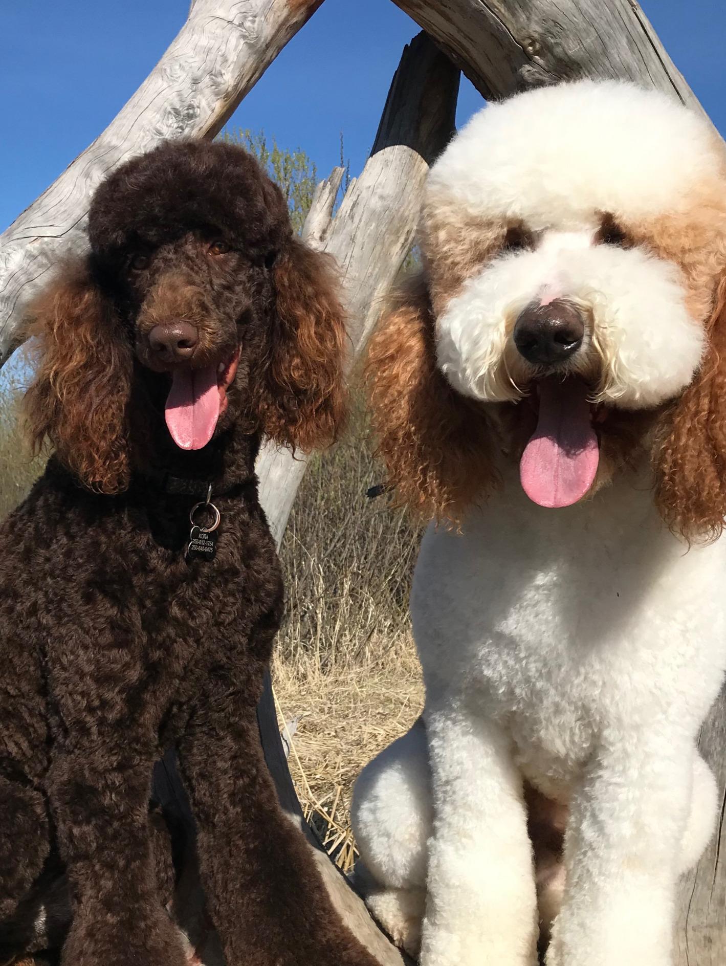 Kona & Archie