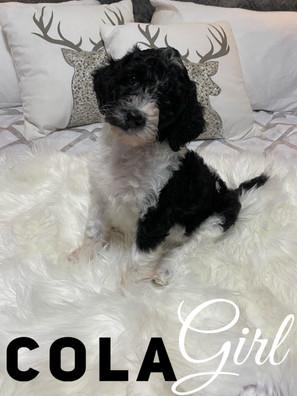 Cola - Girl