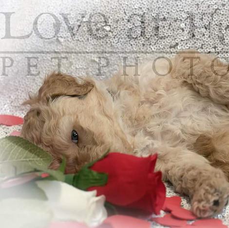Love at Fur Sight - Pet Photography