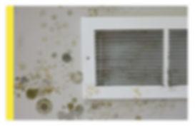 mold_2.jpg