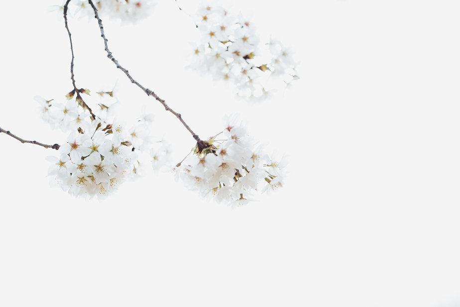 masaaki-komori-frA8Mrb2rA4-unsplash.jpg