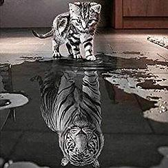 Chat-Tigre.jpg