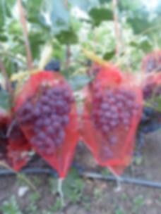 Мешочки для винограда
