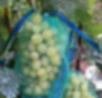 сетки для винограда