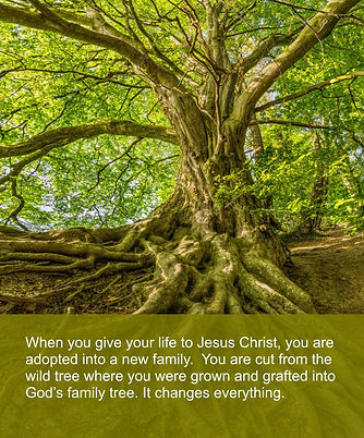 God's_Family_Tree.jpg