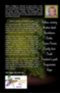 Back cover of Through the Land of Cloud and Leaf