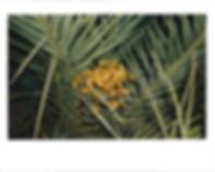 Screen Shot 2020-05-21 at 6.21.04 PM.png