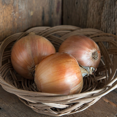 Cortland yellow onion 250 pelleted seed per pack