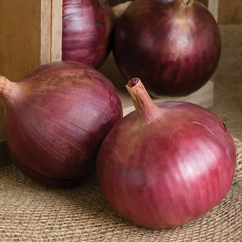 Cabernet red onion 250 pelleted seed per pack