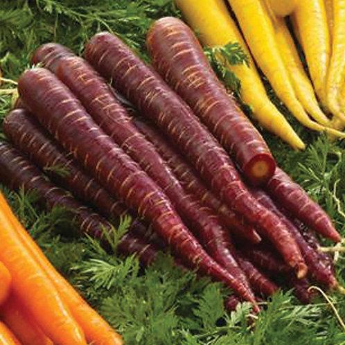 Purple Elite Pelleted carrot seed   Organic 250 seed per packet