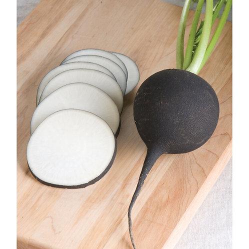 Nero Tondo (organic) Black Spanish Radish