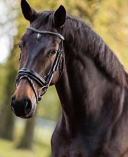 queen paard.png