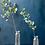 Thumbnail: Eucalyptus