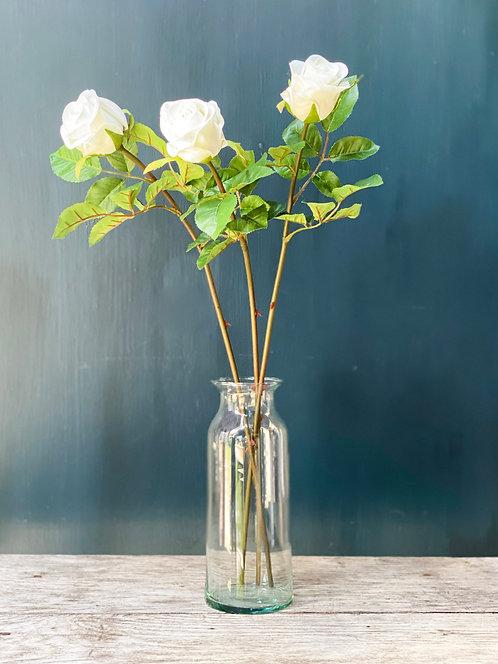 'Classic' Roses