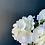 Thumbnail: Hydrangea Branch
