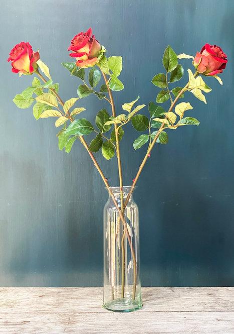 'Luxury' Roses
