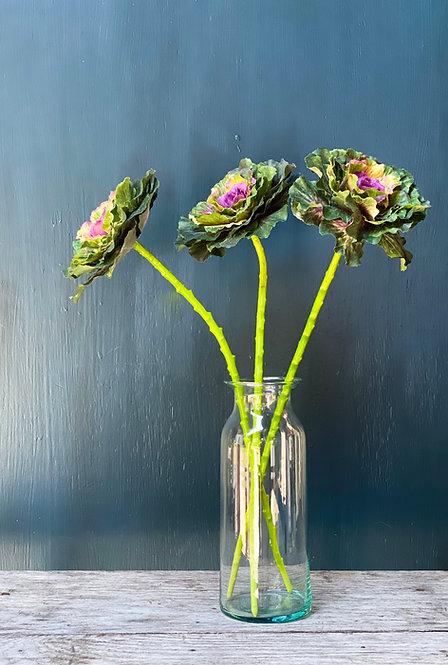 Cabbage Stem