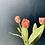 Thumbnail: Tulip