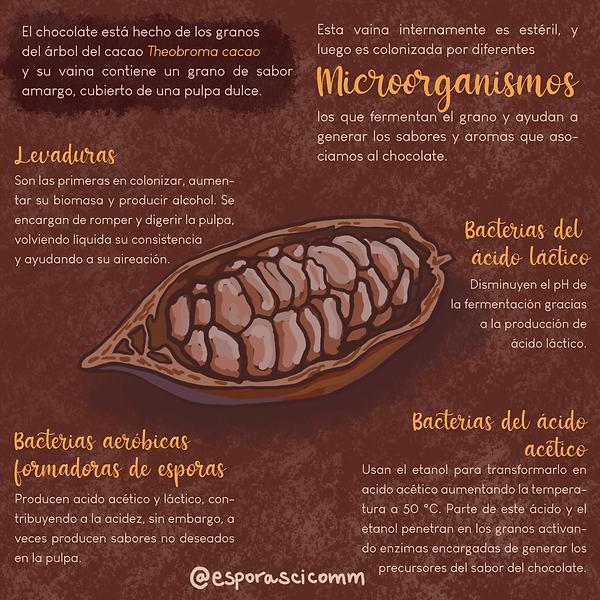 Chocolate2_ES.png