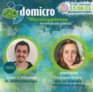 Microorganismos viviendo en piletas