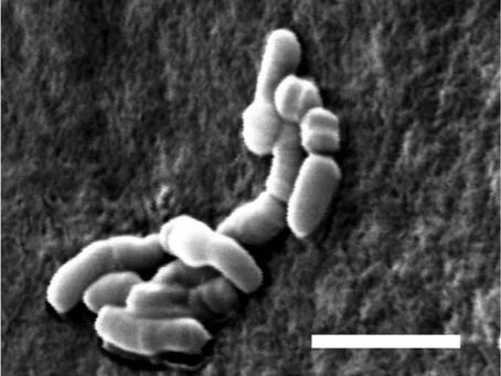 ¡Nueva vida microscópica en las alturas de los Andes!