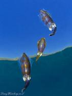 Squids trio