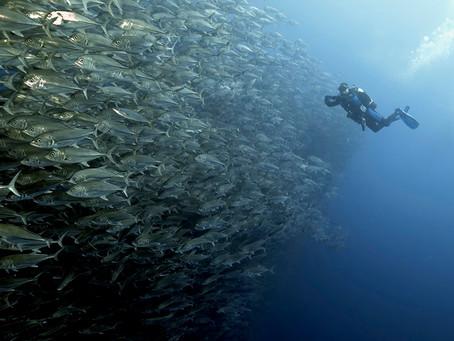 צילום להקות דגים