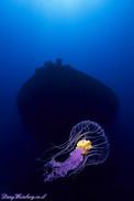Jellyfish under the wreck
