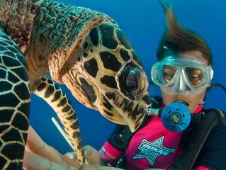 צילומי צוללים מתחת למים