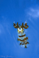 The flying Squid