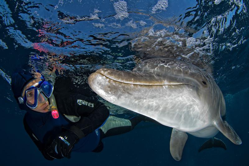 אינטרקציה בין משנרקלת לדולפין בר- מרקו בחוף הצפוני