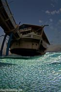 Sardines under the underwater restaurant