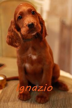 Ignazio.png