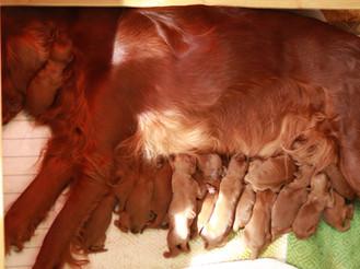 alle zu mammi!