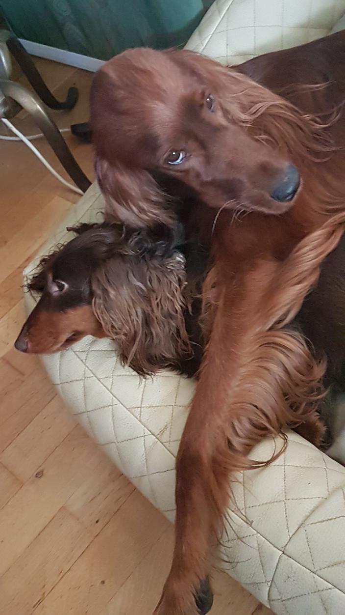 Ari und Cookie, beste Freunde
