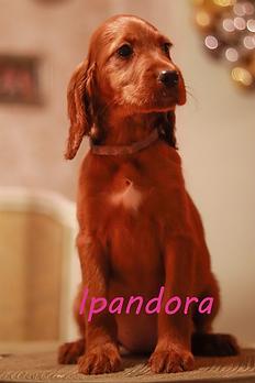 Ipandora.png