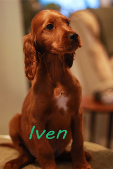 Iven.png