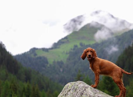 20km wandern in den Bergen? Nichts stoppt unser Rudel