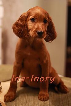 Ina-Inory.png