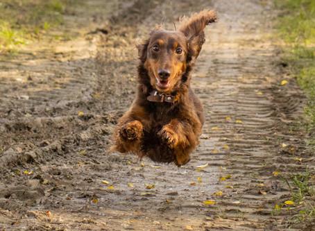 Unsre Cookie fliegt durch den Herbst wie der Wind über die Felder . . .