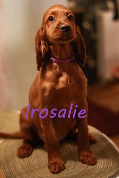 Irosalie.png