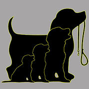 Professionally trained puppies, trained dogs, dog training.
