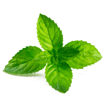 Mint has been known for a very long time as a 'medicinal herb'. The aroma of the herb is thought to activate the salivary glands and also the glands which produce digestive enzymes in the mouth helping to facilitate digestion. It's also believed that mint helps to sooth the stomach in times of indigestion or inflammation and can help to reduce gas production.