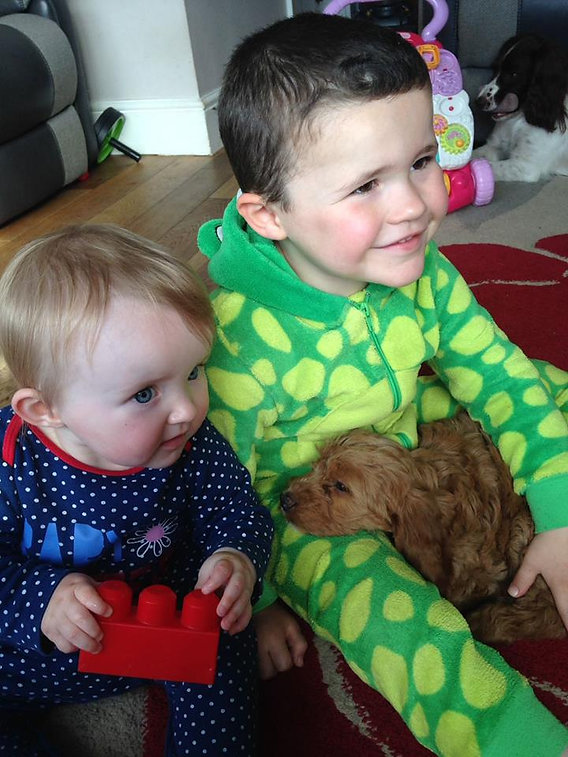 trained puppies should receive early socialisation with children from a professional dog trainer