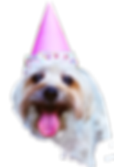 My dogs birthday party!