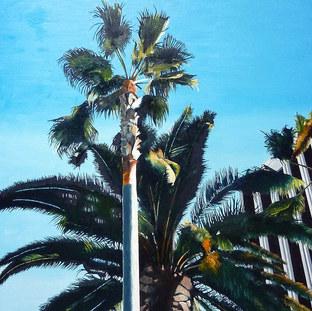 Palm Trees at LACMA, 2013
