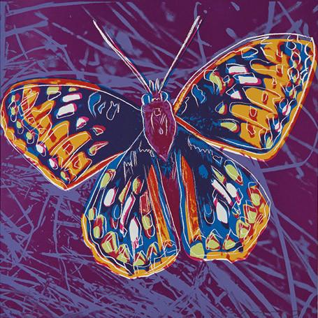 San Francisco Silverspot Butterfly