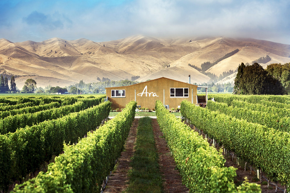 Ara-marlborough-landscape-wide-ara-wools