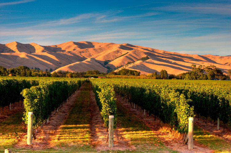 Ara-marlborough-landscape-wide-vines-hil